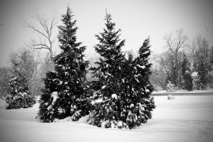 Snijeg :)